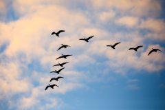 Cloudfile: cómo gestionar tus datos en la Nube