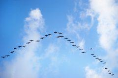 Aplicaciones en la nube: ¿cuáles necesita tu negocio y por qué?